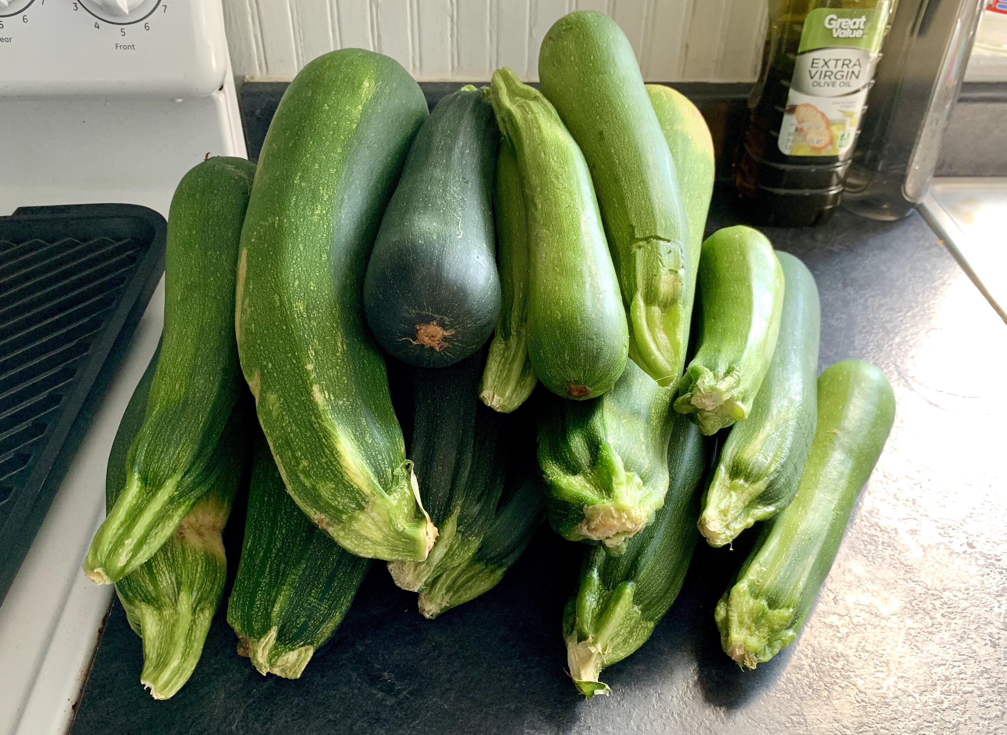 Zucchini bounty